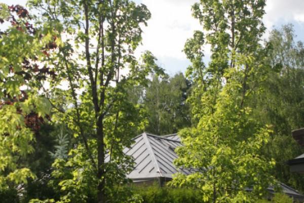 arhangelskoe1-landscaping-design-33F339DAC3-0A32-4B6A-BD21-A952DEF2C47C.jpg